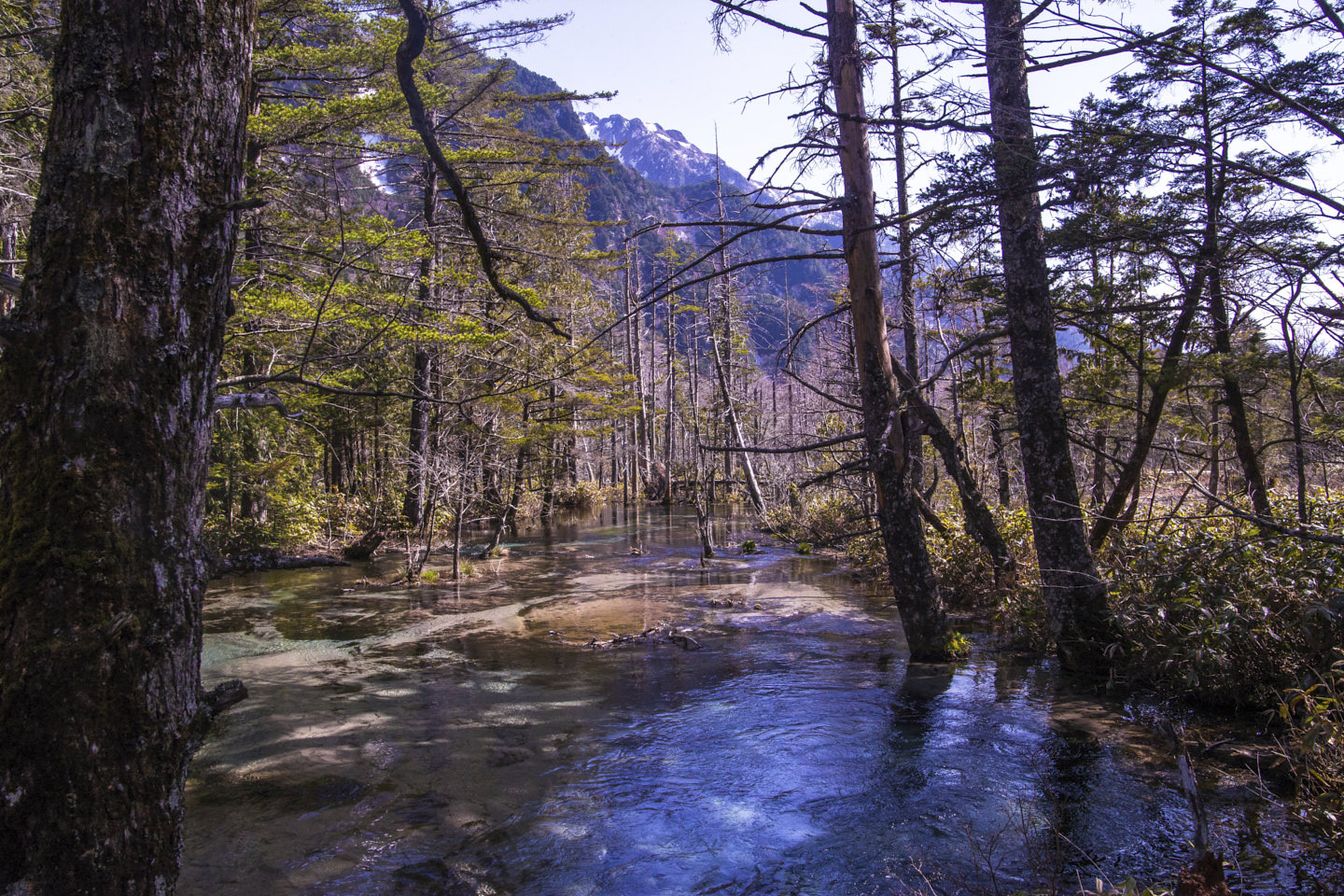 A swamp-like drowned forest river of Kamikochi