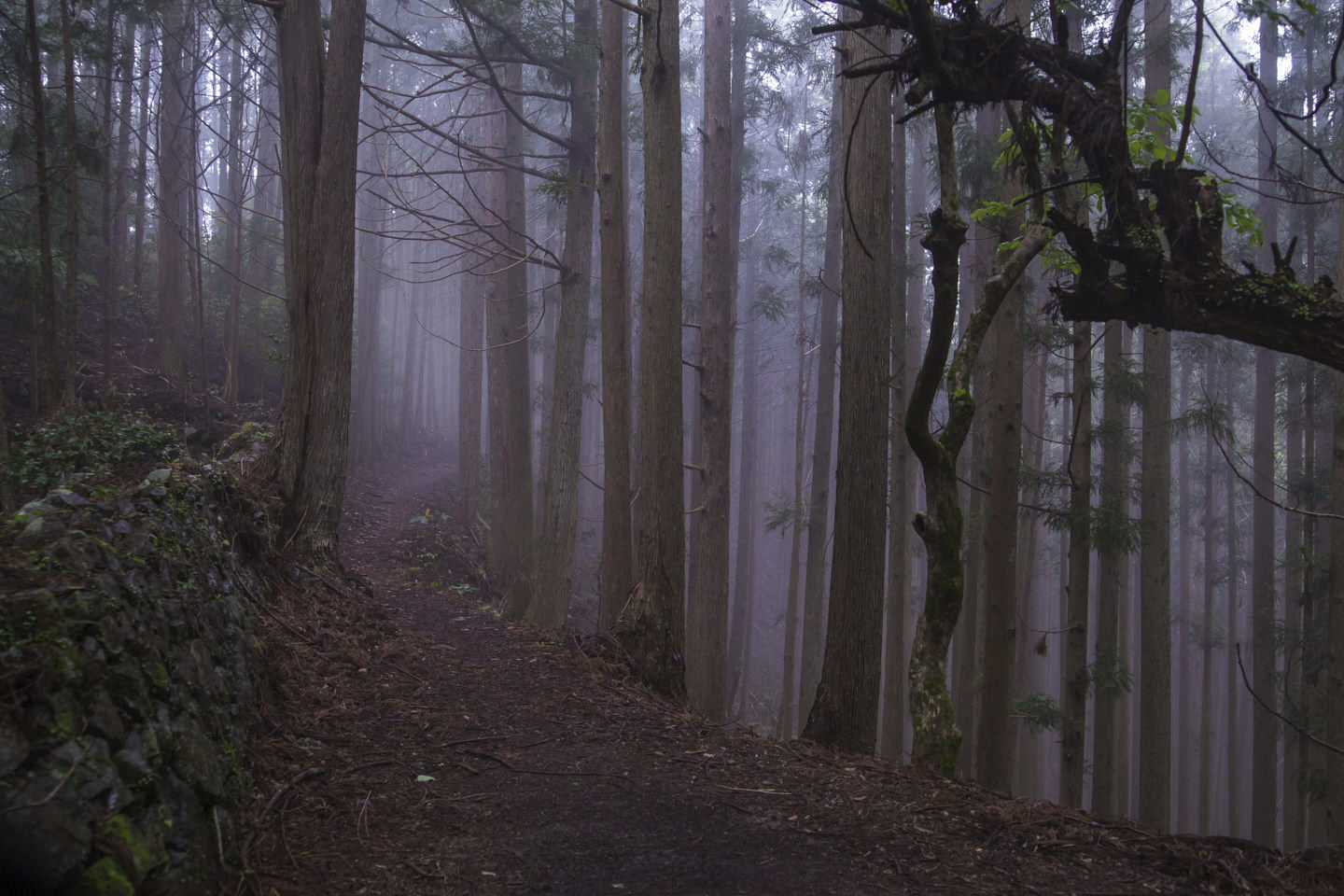 A path weaves deep into woodland between treetrunks and fog